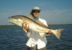 A Large Mosquito Lagoon Redfish